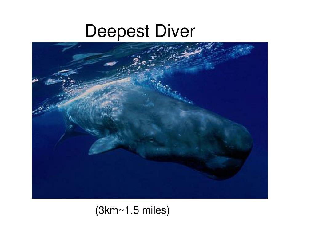 Deepest Diver