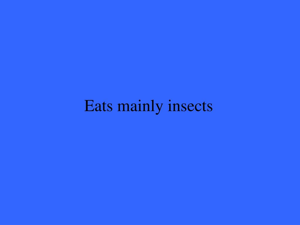 Eats mainly insects