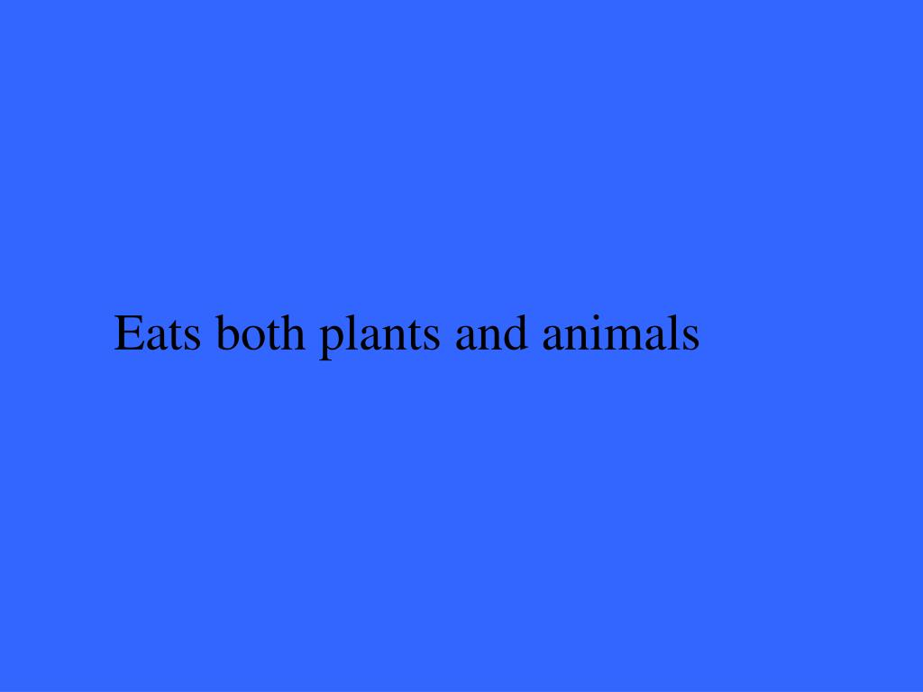 Eats both plants and animals