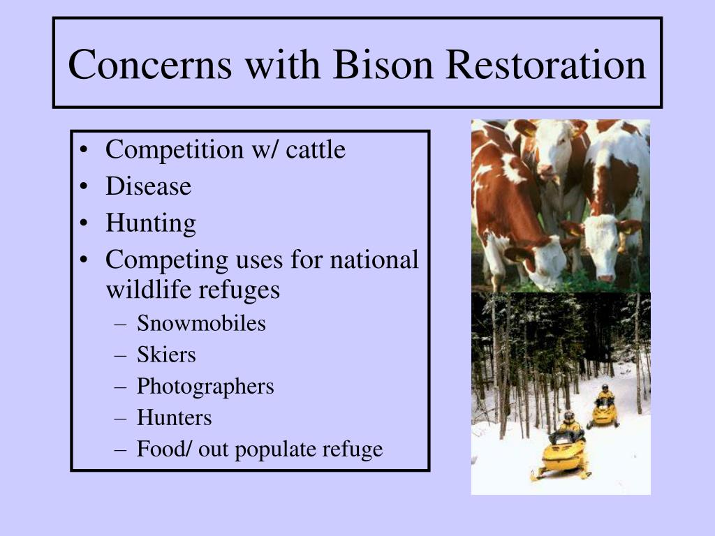 Concerns with Bison Restoration