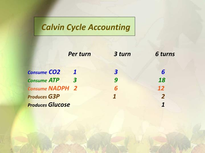 Calvin Cycle Accounting