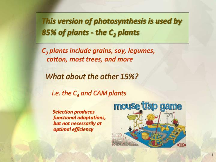 This version of photosynthesis is used by 85% of plants - the C