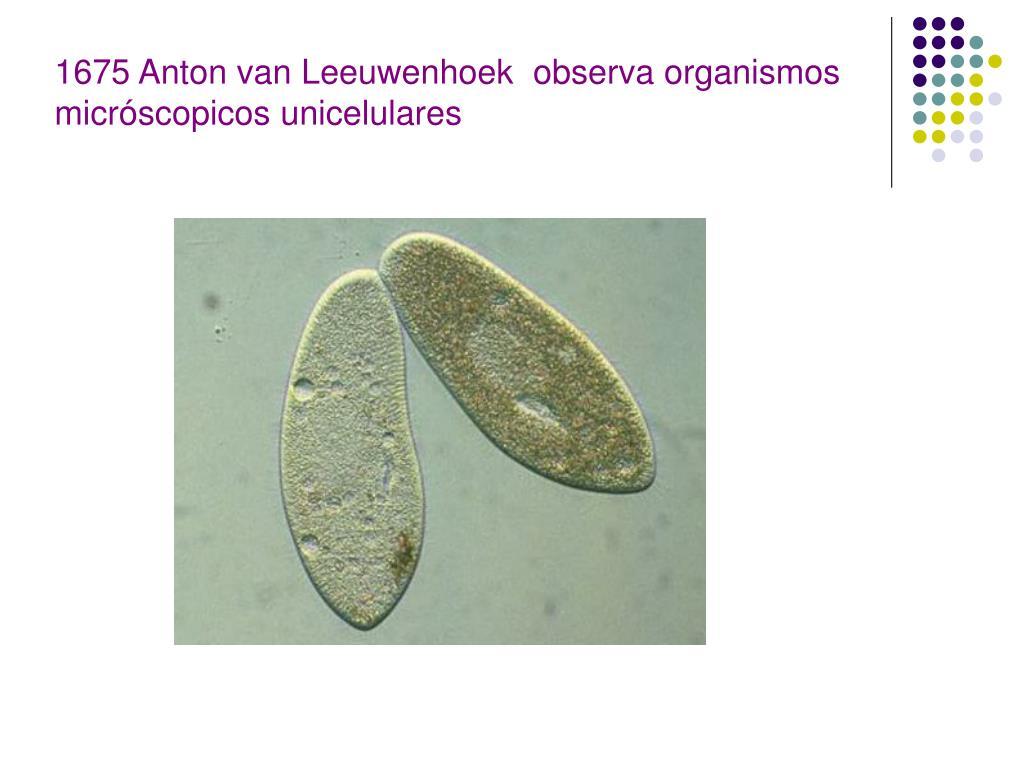 1675 Anton van Leeuwenhoek  observa organismos micróscopicos unicelulares