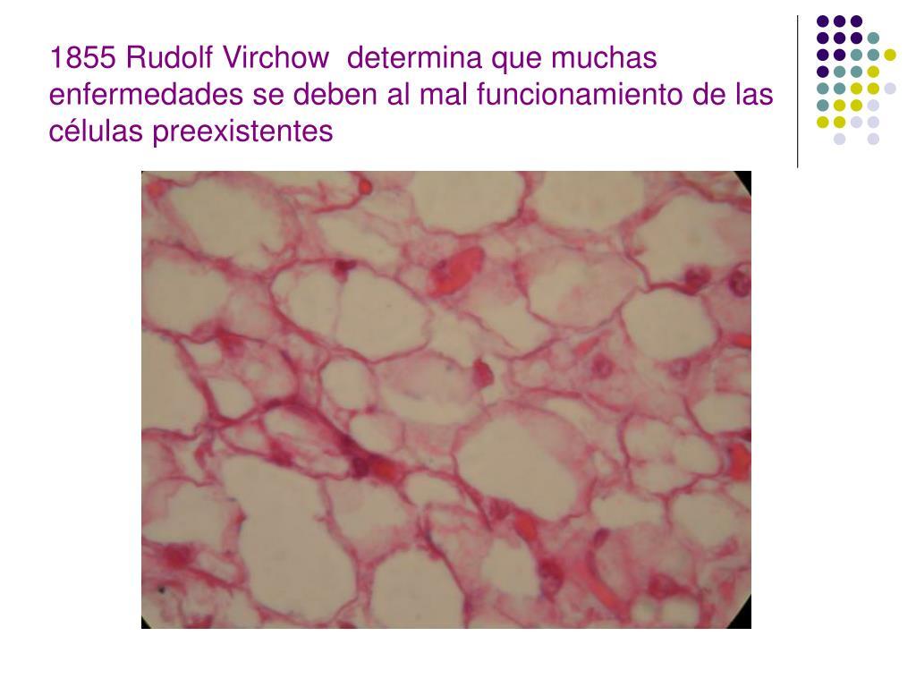 1855 Rudolf Virchow  determina que muchas enfermedades se deben al mal funcionamiento de las células preexistentes