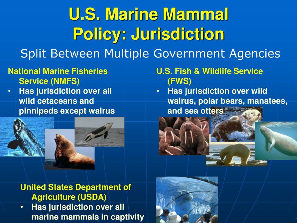 U.S. Marine Mammal