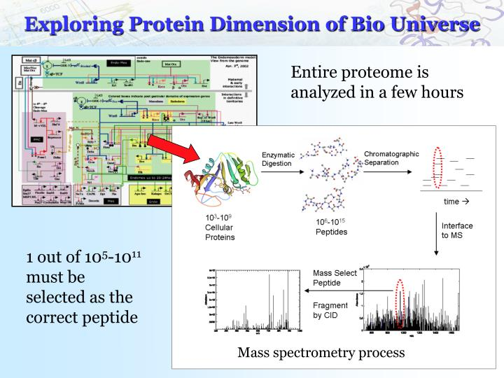 Exploring Protein Dimension of Bio Universe