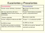 eucariontes y procariontes