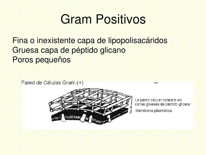 Gram Positivos