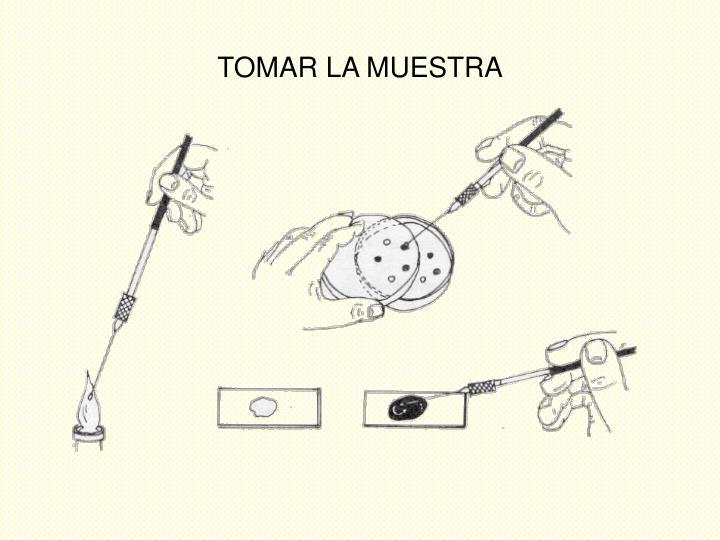 TOMAR LA MUESTRA