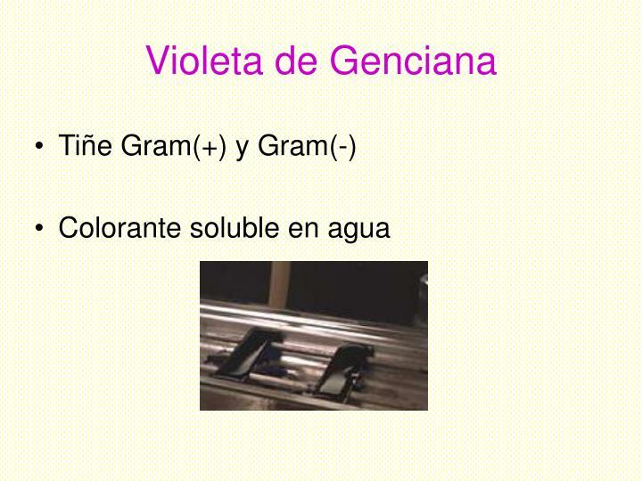 Violeta de Genciana