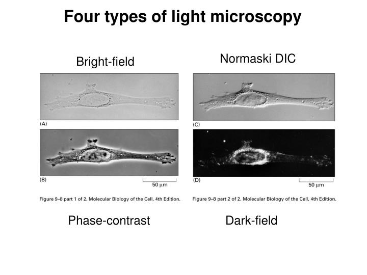Four types of light microscopy