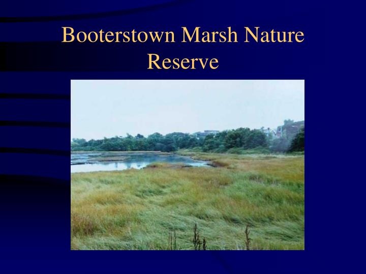 Booterstown Marsh Nature Reserve