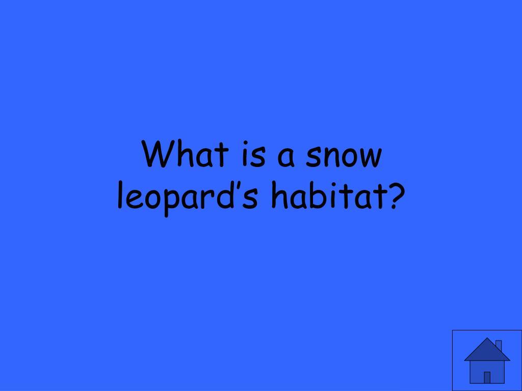 What is a snow leopard's habitat?