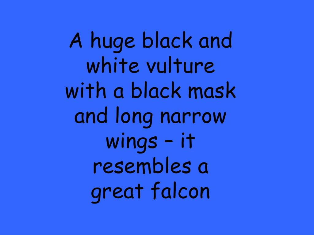 A huge black and white vulture with a black mask and long narrow wings – it resembles a great falcon