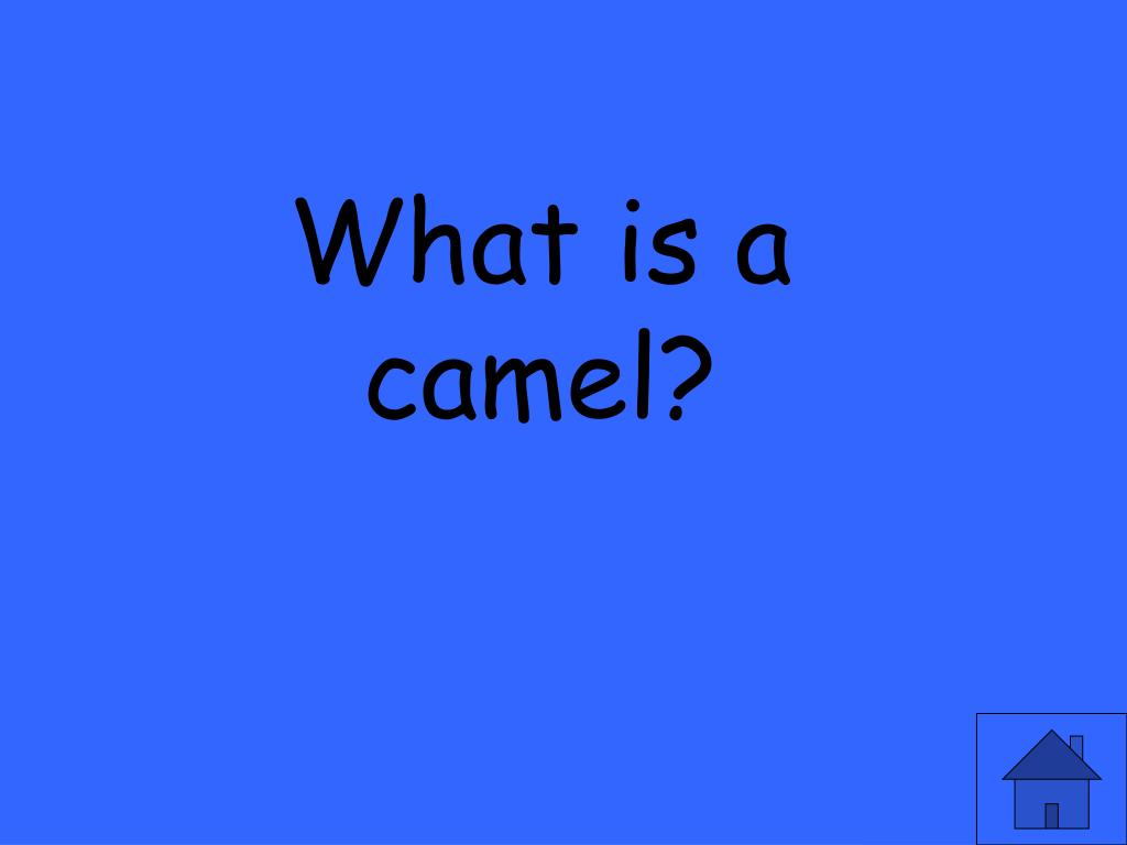 What is a camel?