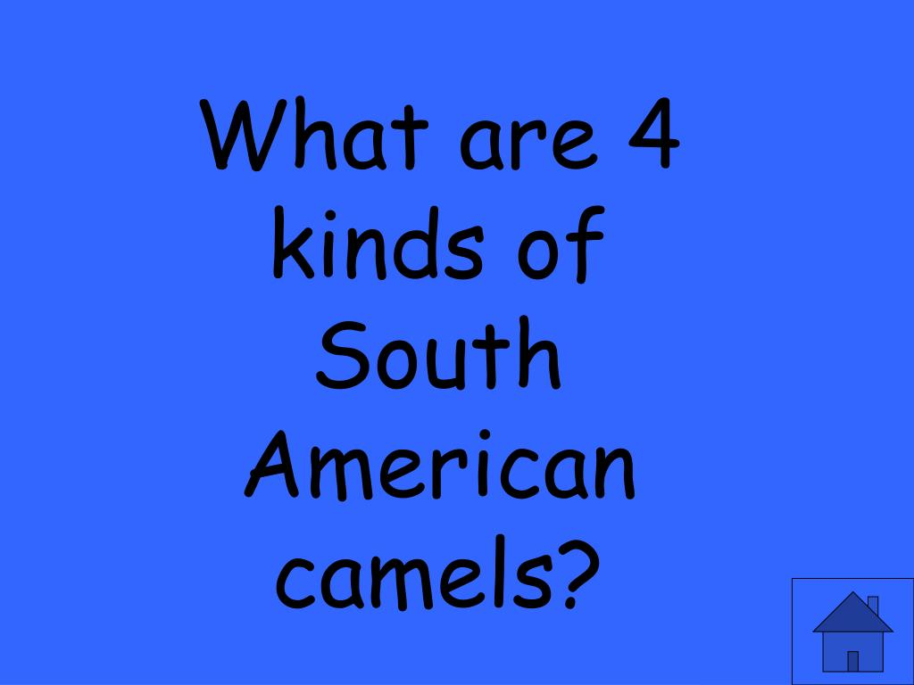 What are 4 kinds of South American camels?