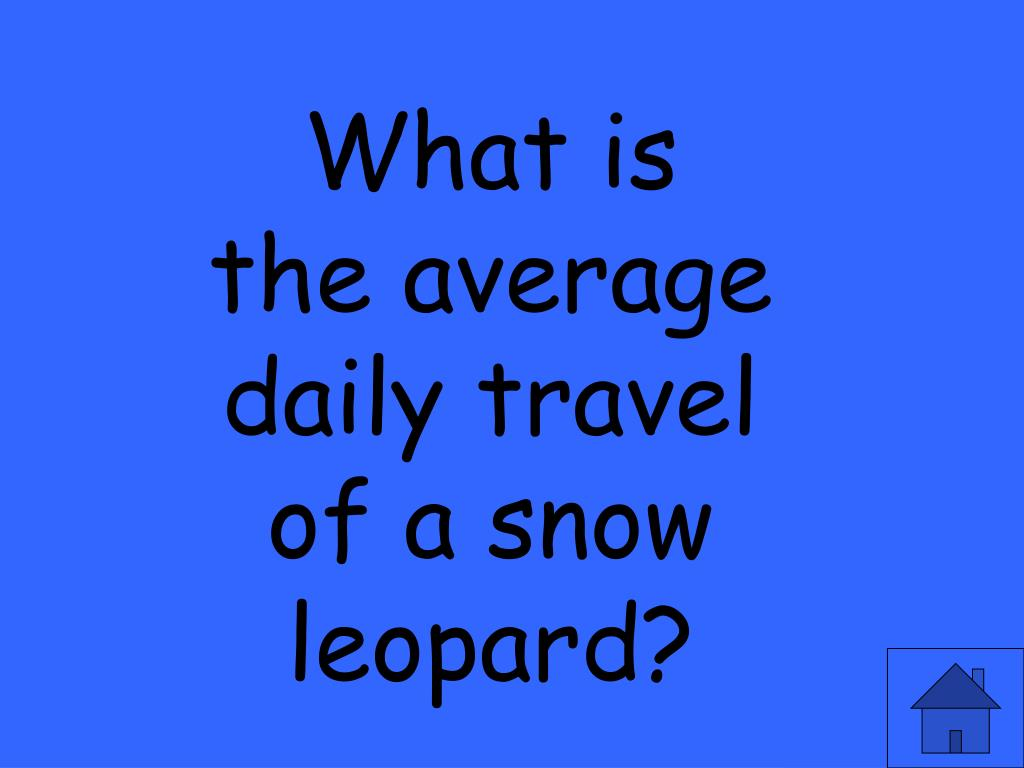 What is the average daily travel of a snow leopard?