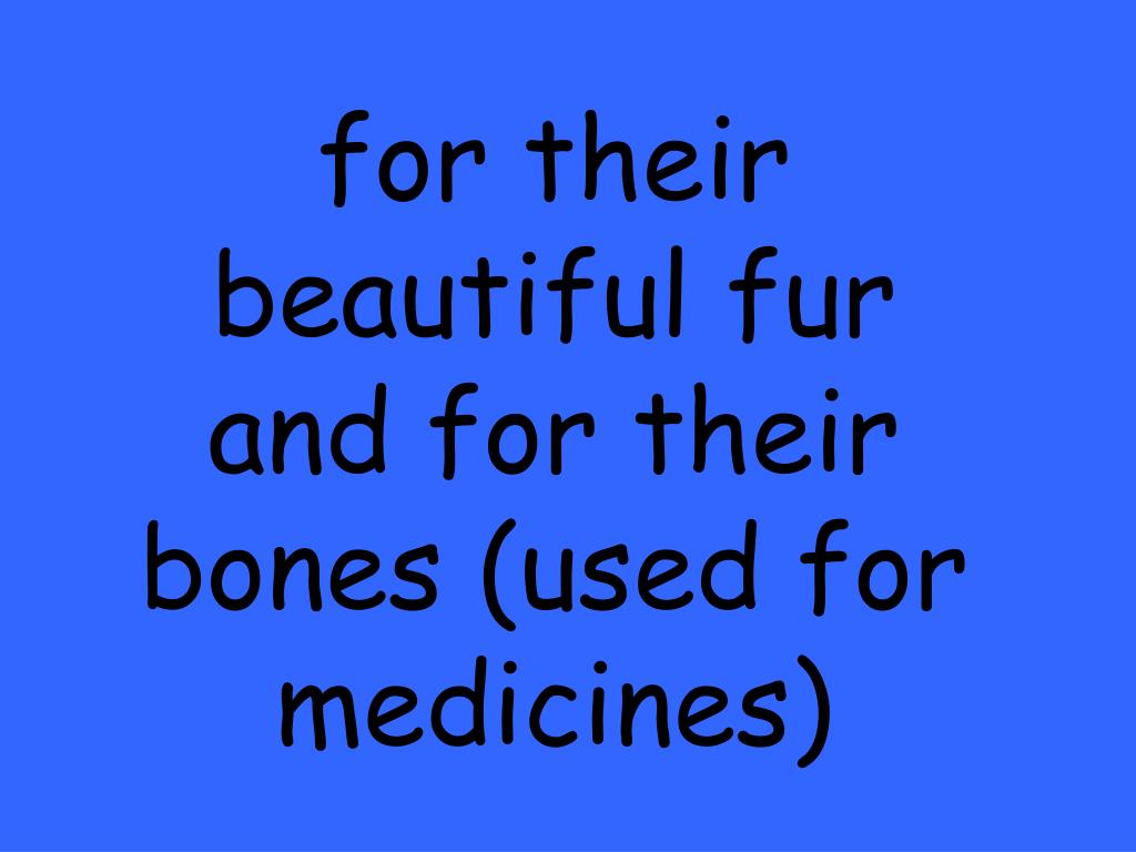for their beautiful fur and for their bones (used for medicines)