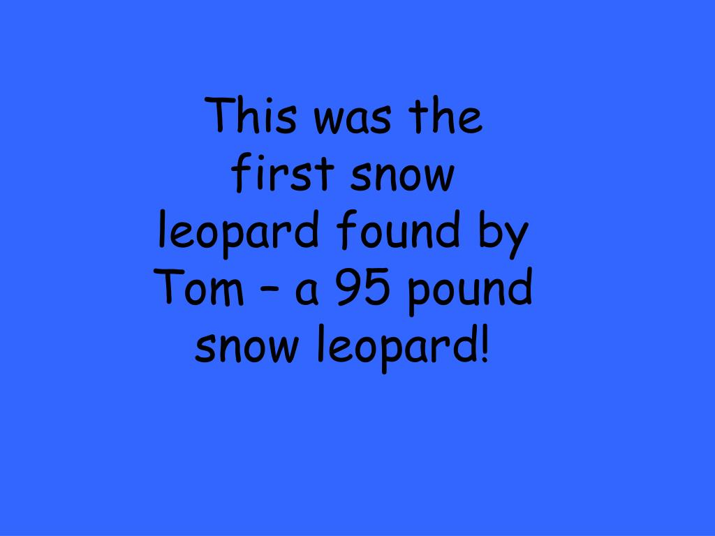 This was the first snow leopard found by Tom – a 95 pound snow leopard!