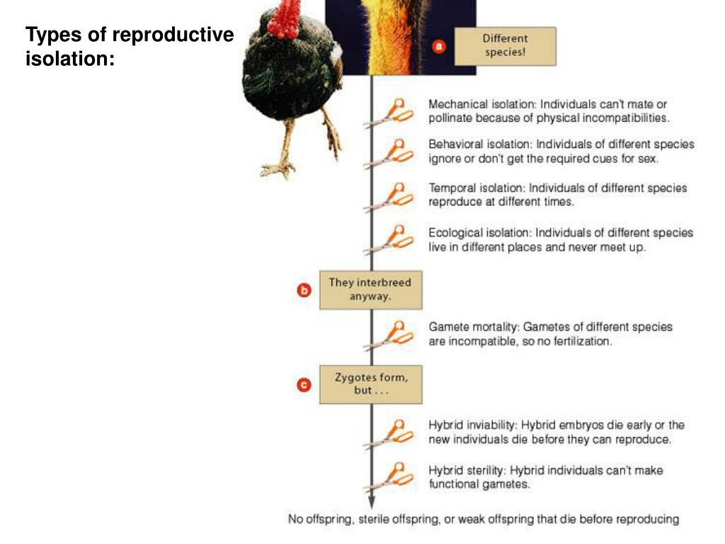 Types of reproductive isolation: