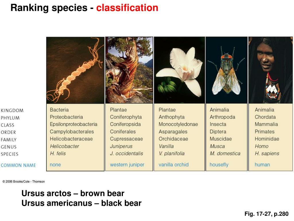 Ranking species -