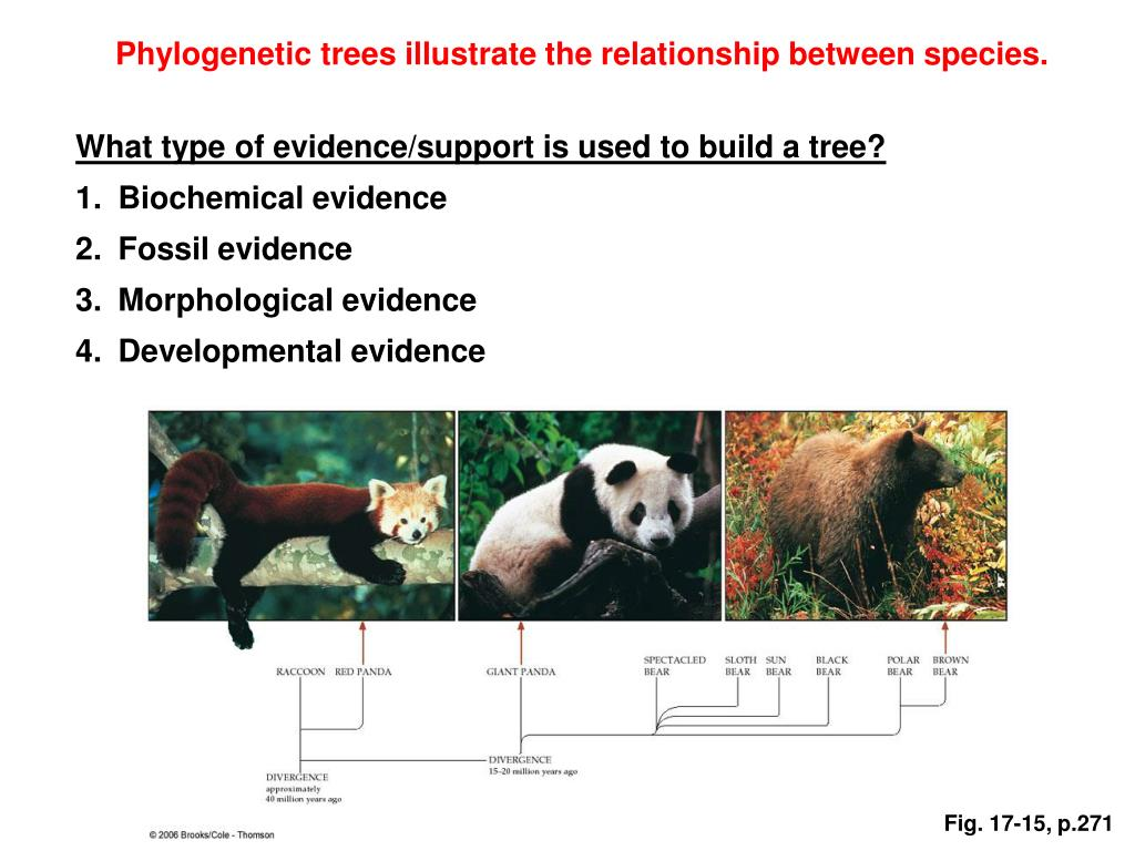Phylogenetic trees illustrate the relationship between species.
