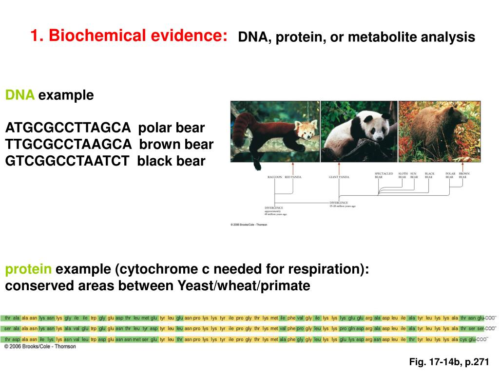 1. Biochemical evidence: