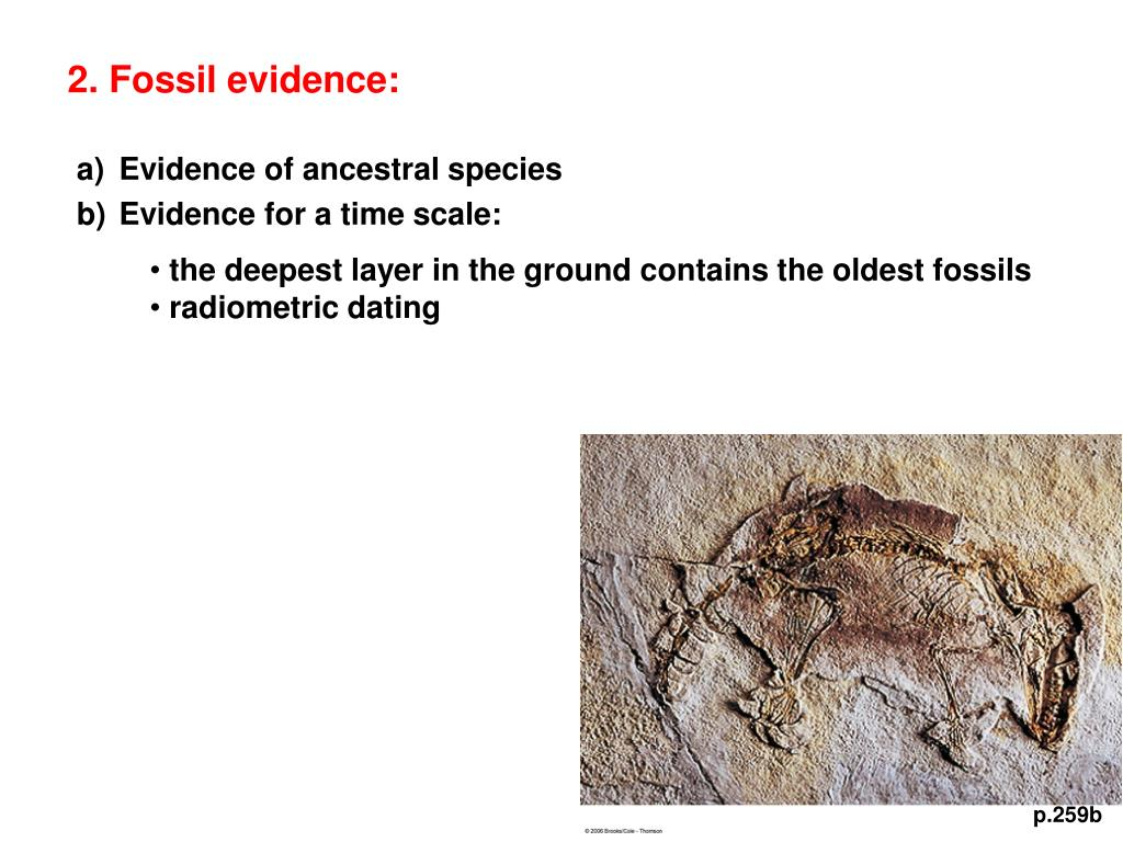 2. Fossil evidence: