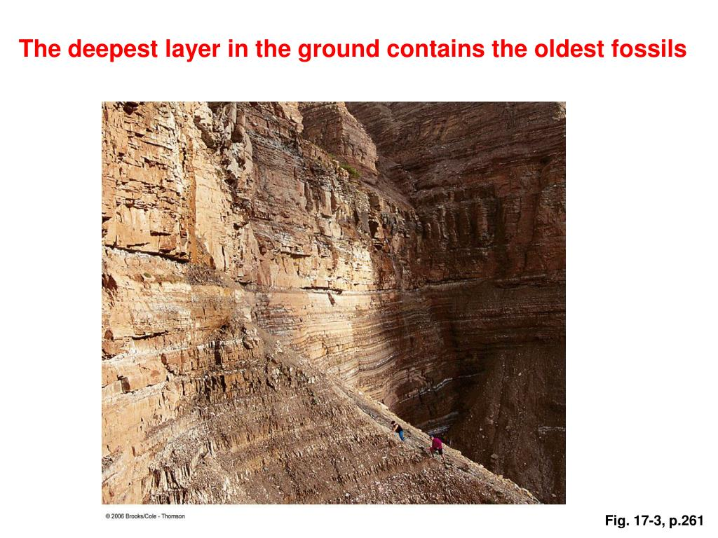 The deepest layer in the ground contains the oldest fossils