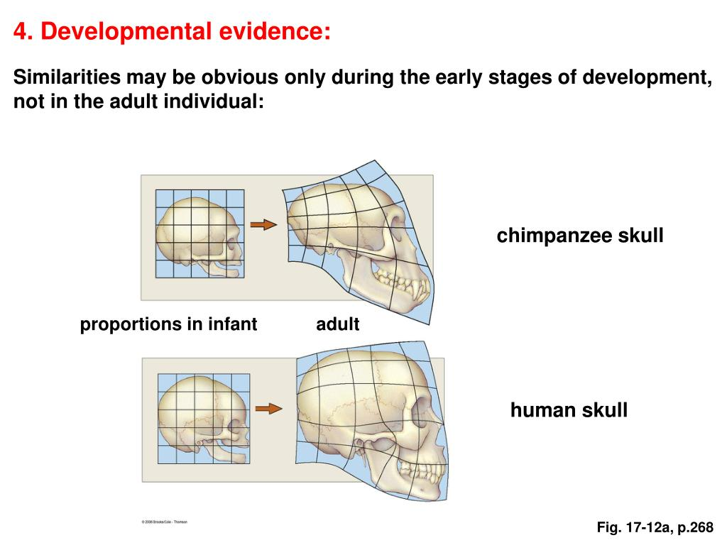 4. Developmental evidence:
