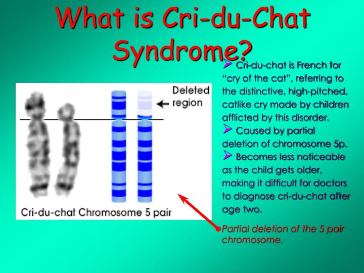 trisomy 5p Rearrangements involving chromosome 5p often result in two syndromes, cri-du- chat (cdc) and trisomy 5p, caused by a deletion and.