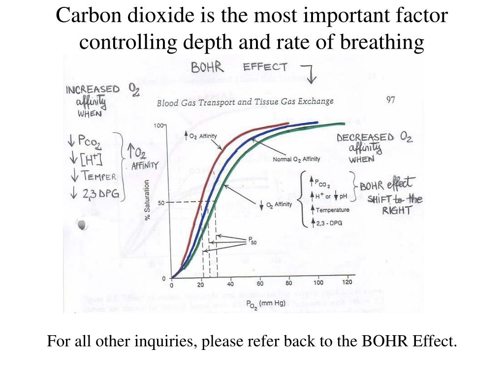 Carbon dioxide is the most important factor controlling depth and rate of breathing