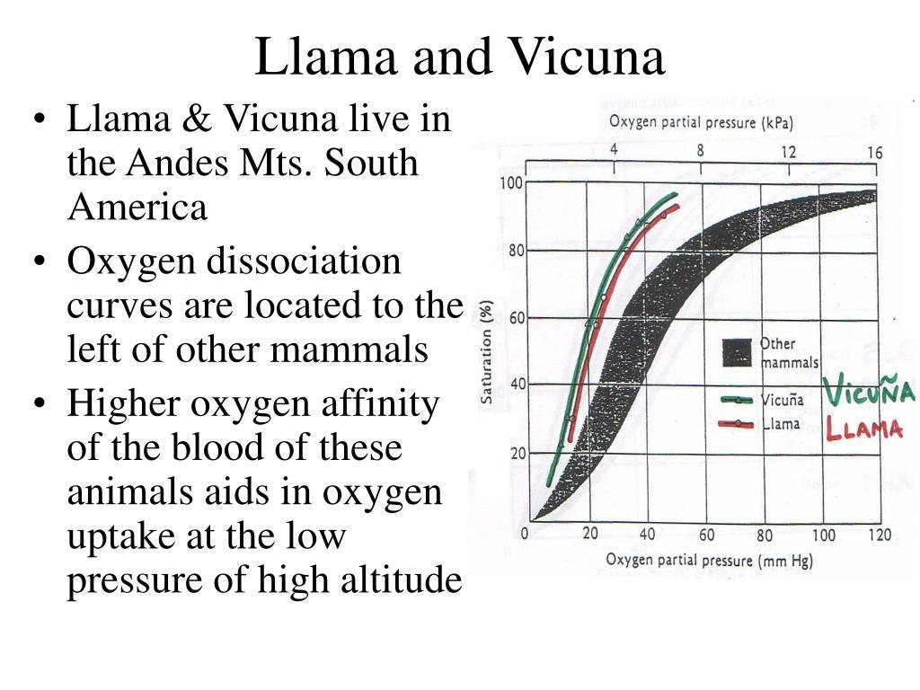 Llama and Vicuna