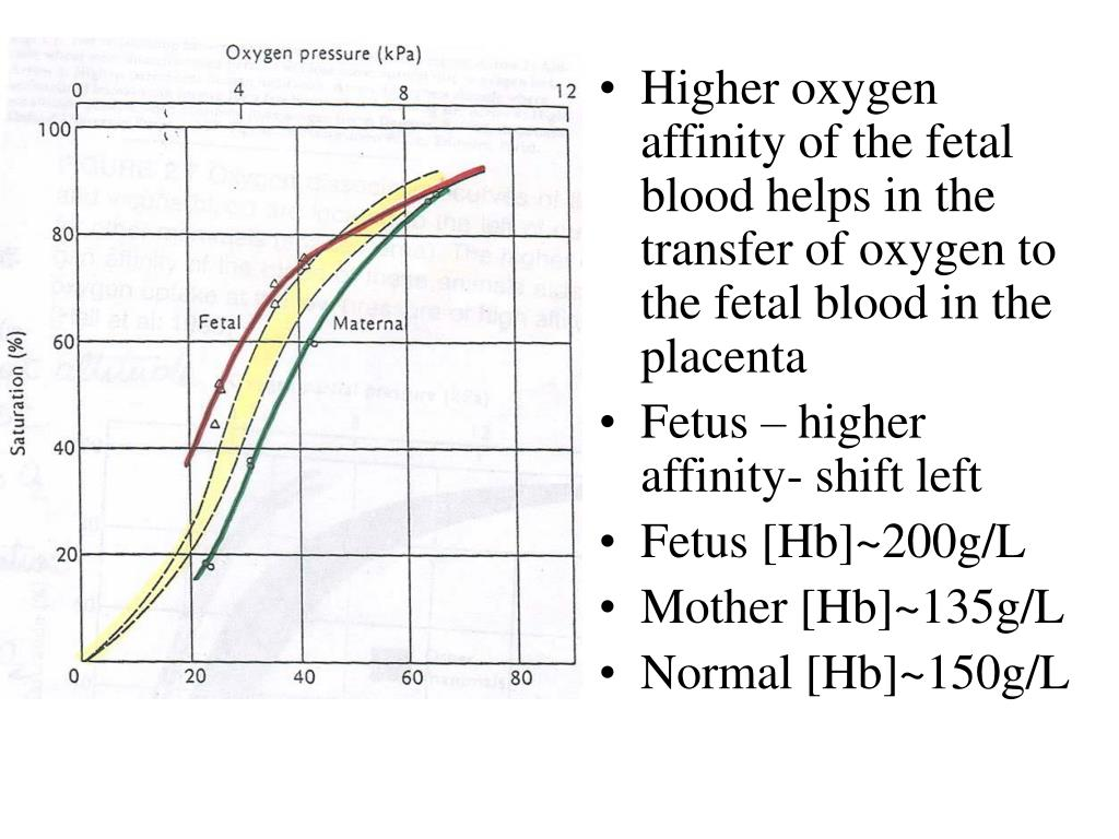 Higher oxygen affinity of the fetal blood helps in the transfer of oxygen to the fetal blood in the placenta