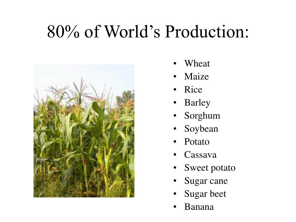 80% of World's Production: