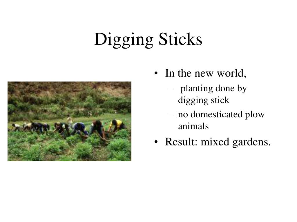 Digging Sticks