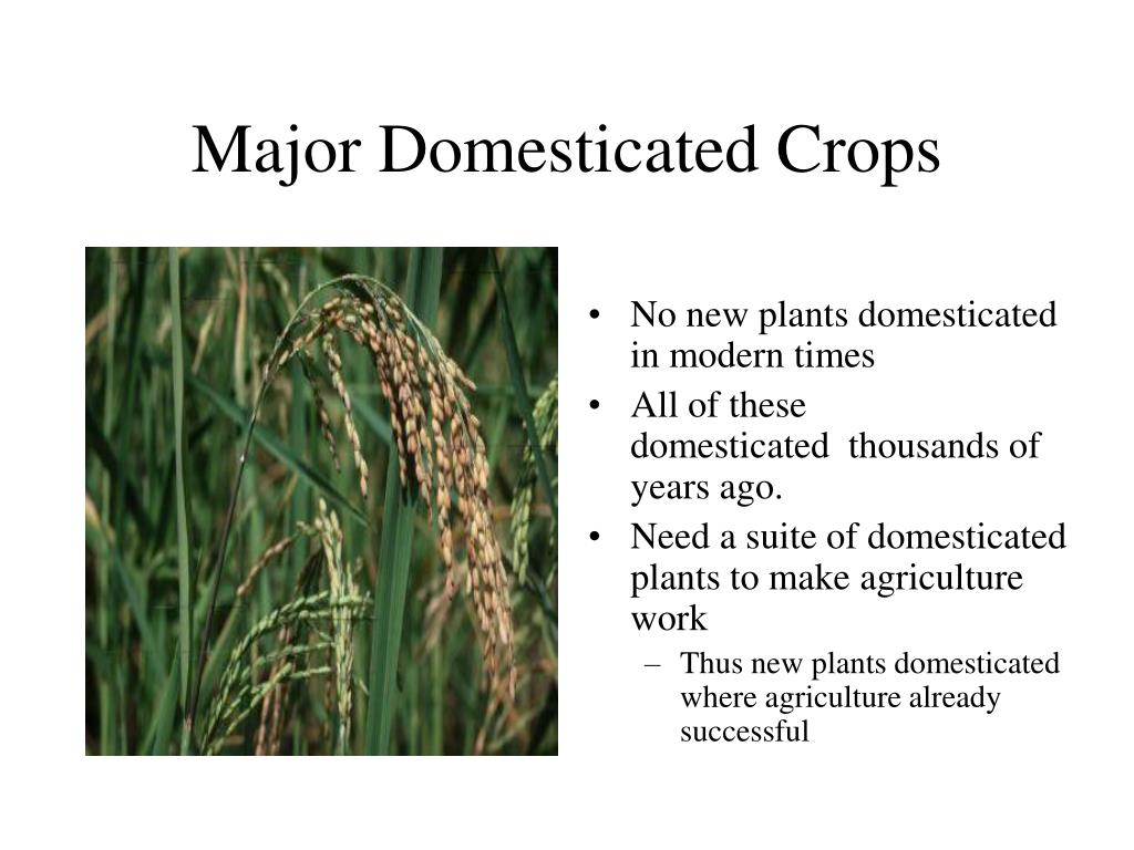Major Domesticated Crops