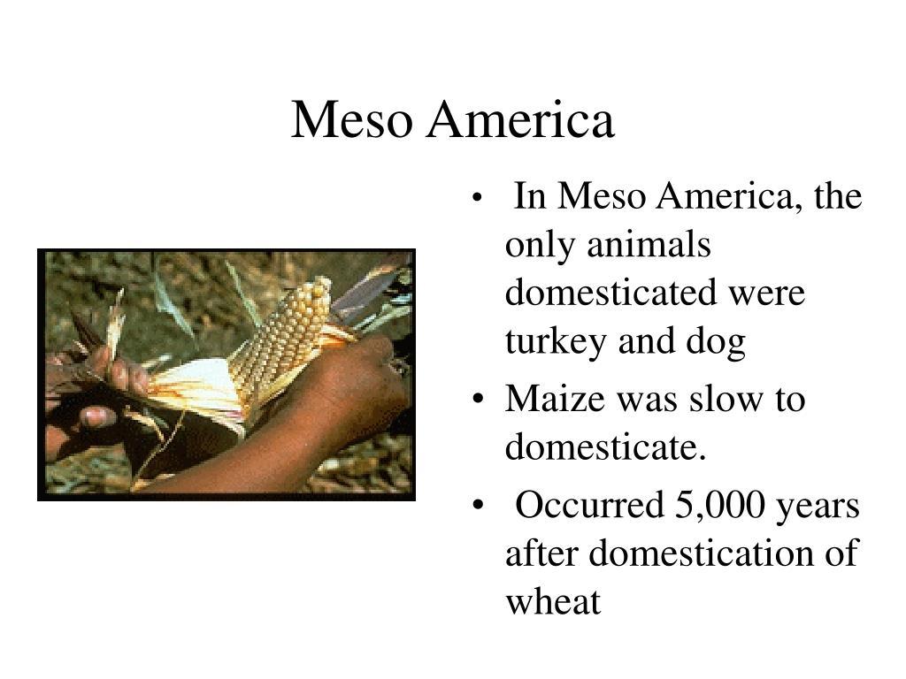 Meso America
