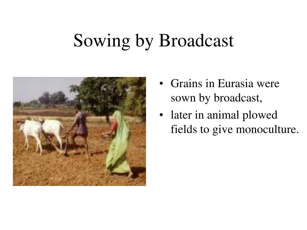 Sowing by Broadcast