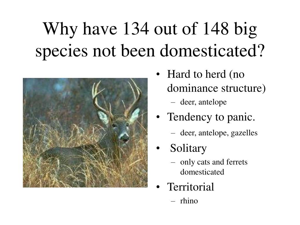 Why have 134 out of 148 big species not been domesticated?