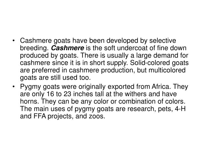 Cashmere goats have been developed by selective breeding.