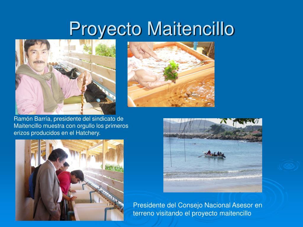 Proyecto Maitencillo