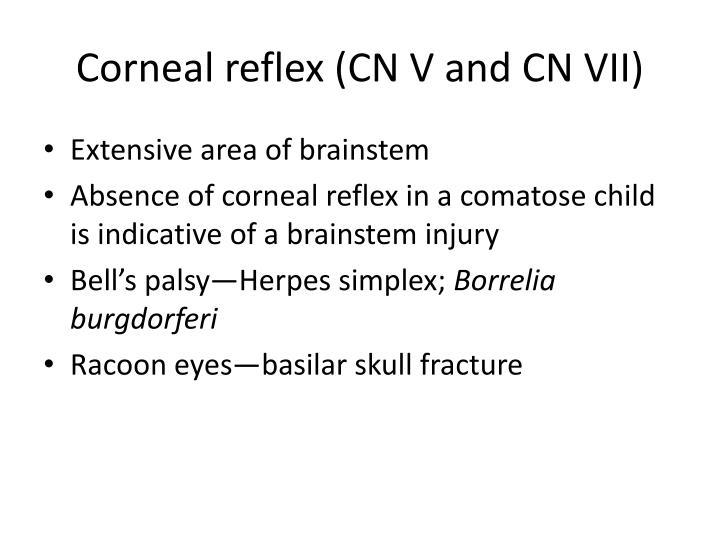 Corneal reflex (CN V and CN VII)