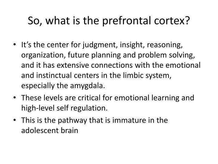 So, what is the prefrontal cortex?
