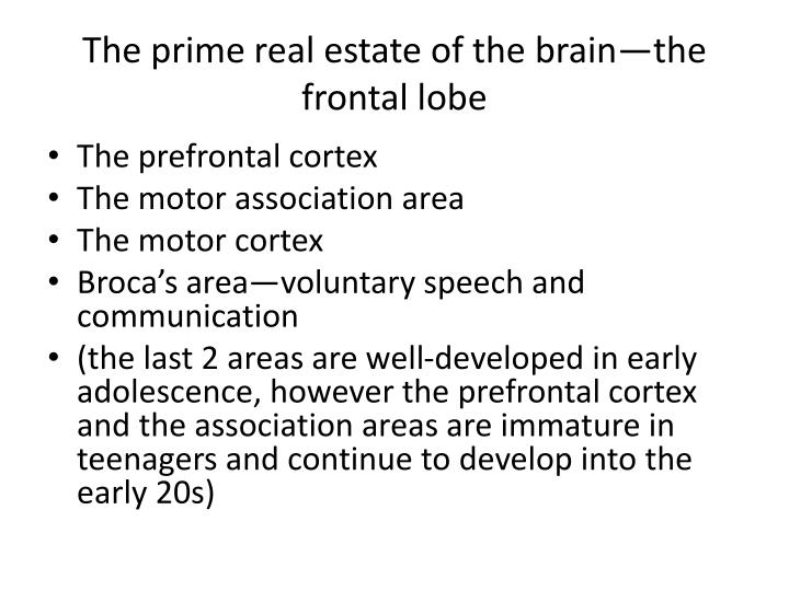 The prime real estate of the brain—the frontal lobe