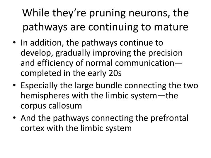 While they're pruning neurons, the pathways are continuing to mature