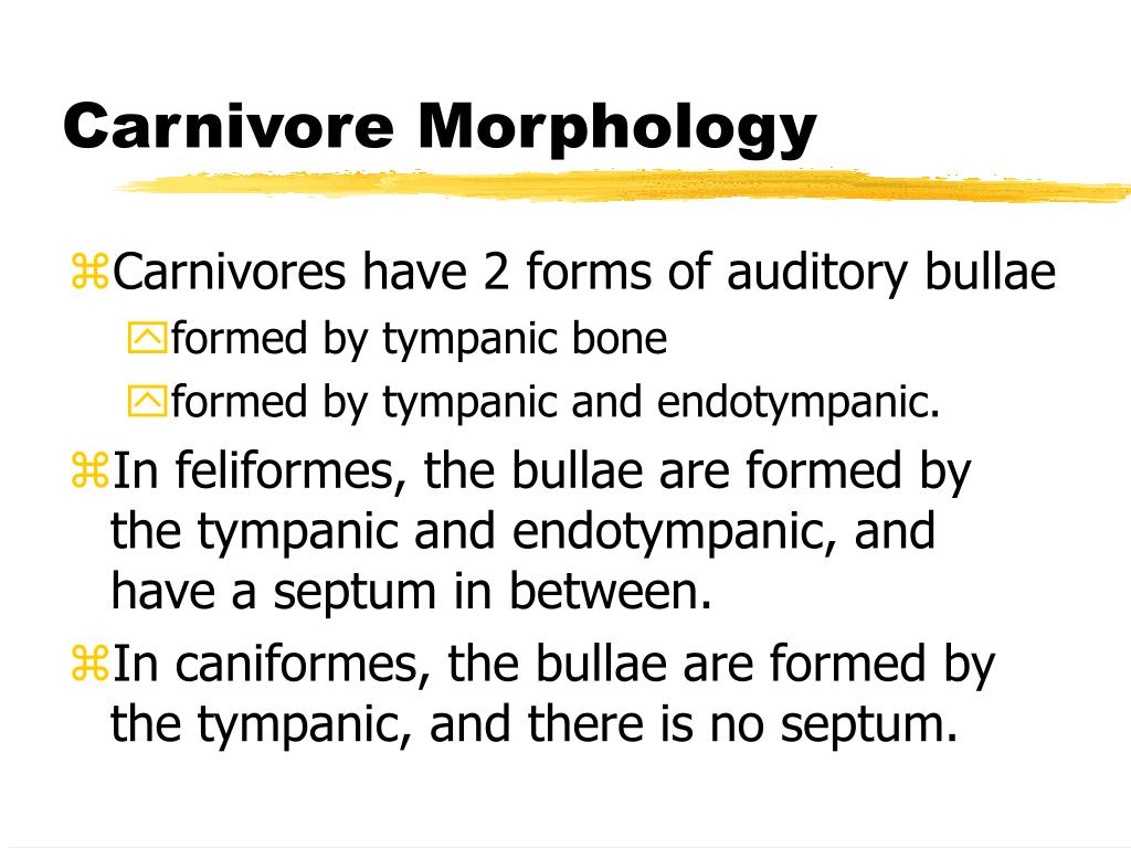 Carnivore Morphology