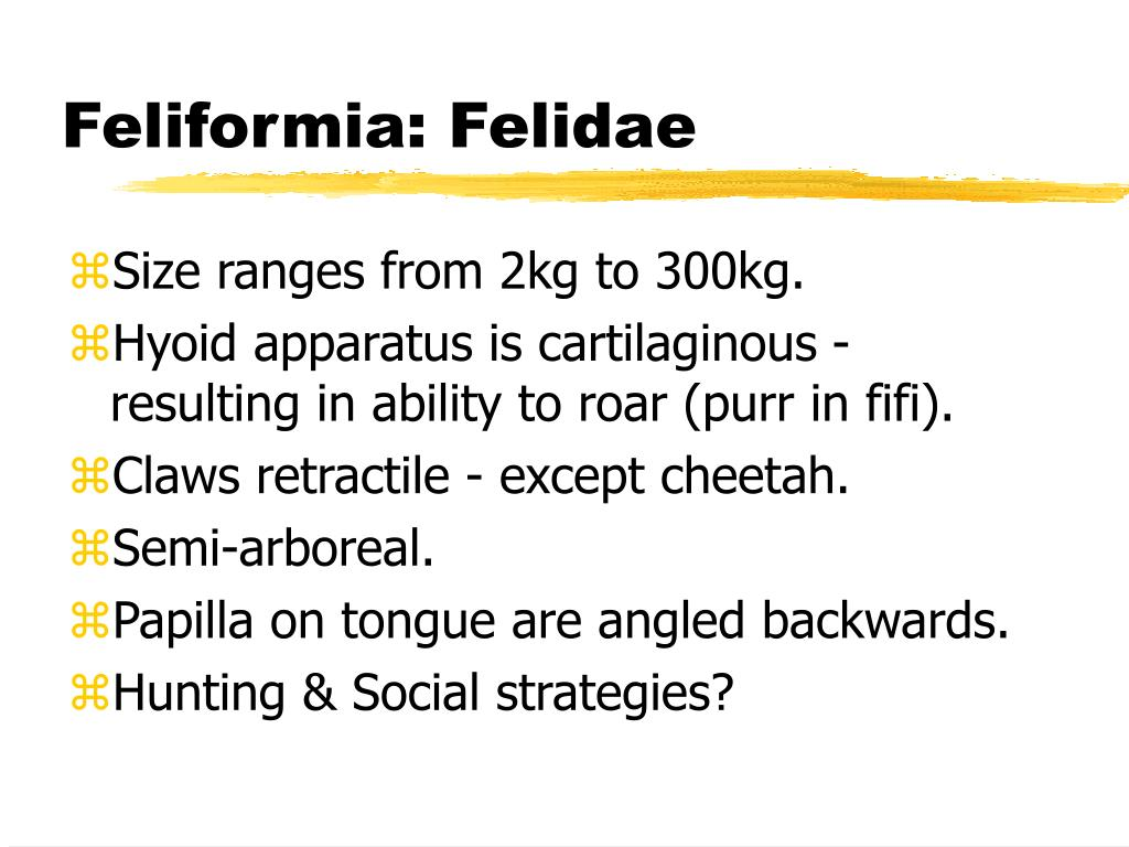Feliformia: Felidae