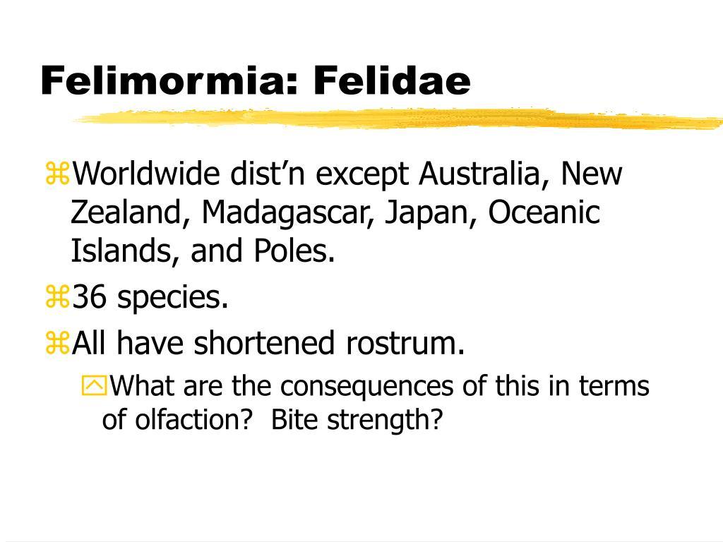 Felimormia: Felidae