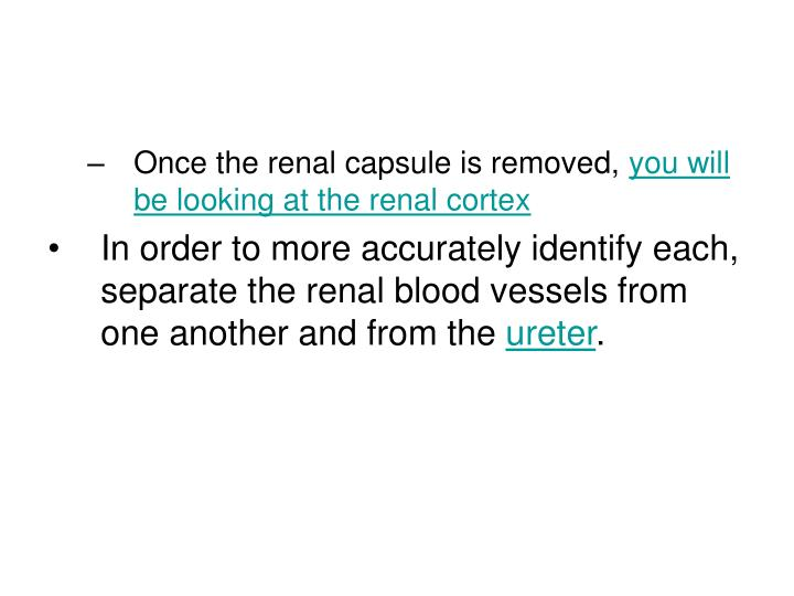 Once the renal capsule is removed,
